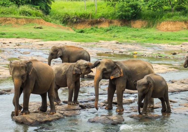 Encounter the wildlife in Sri Lanka
