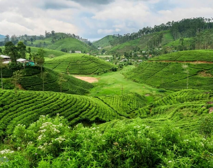 Kandy mountains are home to tea plantations and biodiverse rainforest